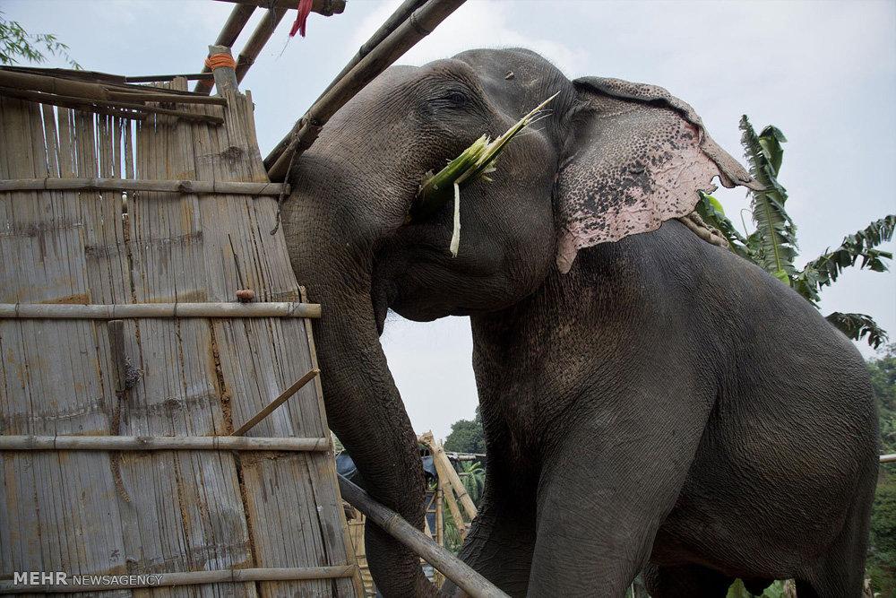 بەوێنە؛ پۆلیسی هیندستان بۆ داڕمانی خانووە بێ مۆڵەتەكان فیل بهکاردەهێنێت